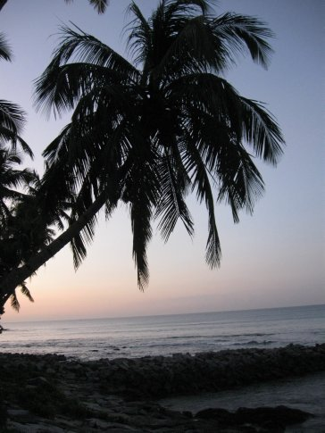 Okay -- not to rub it in for all of you battling sun-less winter in Seattle or snow-shoveling in Chicago, New York, Mass. or DC -- but this was the view we woke up to each morning at our home-stay in Kollam.