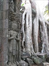 Although not as famous for its trees as Ta Prohm, the Preah Khan temple (dedicated in 1191) provides a similar contrast of natural and man-made beauty.: by ivan_miral, Views[299]