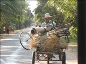 The most common mode of transportation for the local Khmers is the bicycle. They are much more functional than many of us think -- if only Americans would catch on...: by ivan_miral, Views[276]