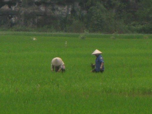 The quintessential Vietnam image.