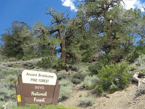 Ancient pines reserve