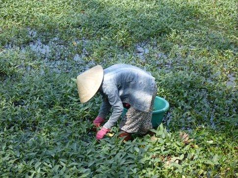 Hard working women are seen all over Vietnam