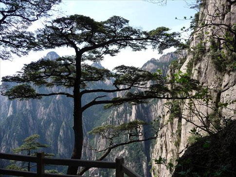 Pine trees and white rocks - what a nice combination!