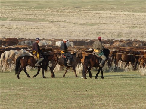 ... we can see a herd of over 1000 horses