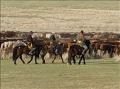 ... we can see a herd of over 1000 horses: by ivanci, Views[814]