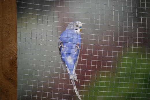 This photograph of one of my birds shows something I'm also passionate about, nature and animals. This bird flying onto the side of the cage was just the most perfect timing for me. It shows again things in my daily community that I've highlighted.