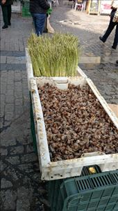 Snails and asparagus for sale in Jerez: by jakemoffat, Views[83]