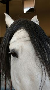 A white horse with a black wig...not really: by jakemoffat, Views[114]