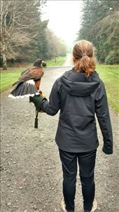Maya's favorite photo with a hawk: by jakemoffat, Views[477]