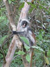 little monkey: by jambobwana, Views[103]