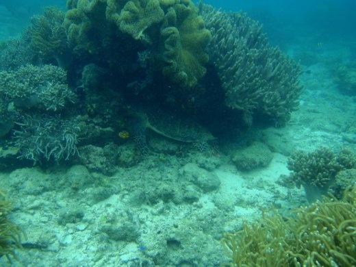 Mabul Island - Hiding Turtle