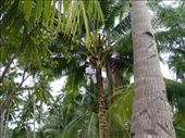 Refreshment gathering, Puerto Barton, Palawan: by jambopablo, Views[363]