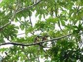 a lovecouple up in the trees: by james-karolien, Views[142]