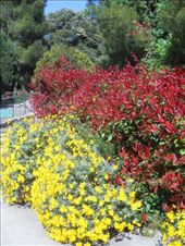 Flowers on the grounds of the Park at the Castle in Nice: by james_tesol_teacher, Views[80]
