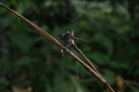Dragonfly (Dan trying to be a photographer !!)