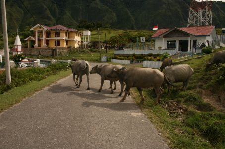 Q. Why did the MooCows cross the road ?!