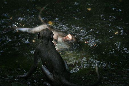 Monkey Bathtime (no not Danielle!)