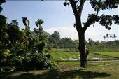 Rice Fields in Lombok: by jamesanddan, Views[313]