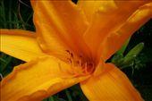 Pretty flower: by jamesanddan, Views[238]
