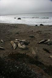 Elephant seals, having a little snooze..: by jamesanddan, Views[159]