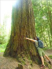 Tree hugging!: by jamesshanks, Views[243]