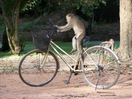 Every body remembers the day they saw a monkey ride a bike. It was just on the side of the road, when we were leaving the Angkor temples.