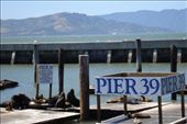 Pier 39. Home of the stinky (but threatened) seals: by jarrod_dani, Views[127]