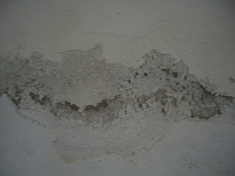 Nothing like flakes from the wall to wake you up in the morning.
