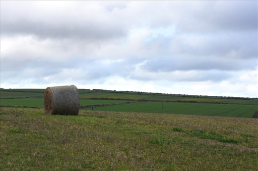 Needle in a Haystack- With miles upon miles of seemingly uninhibited land stretching in front of you, it's easy to feel as though your only companion is the ceaseless and powerful wind.