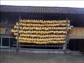 Maize drying in inn on my 2nd night: by jazz81, Views[306]