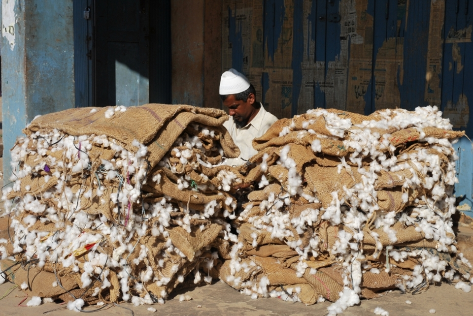 """Cotton a trap"". Cotton is grown near Saraguru and it is fairly common to see trucks overloaded with large bags of cotton passing through the narrow streets. Cotton is a very labor intensive crop and one of the local men said that many parents do not want their children to continue in farming. Instead, the children are encouraged to become doctors or engineers, where they can enjoy an easier life. Partly due to this, more and more people are moving away from the rural areas to find work in those fields and farm owners are finding it increasingly harder to find labor to help run the farms."