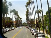 Palm Trees line the streets in Beverly Hills: by jc-dc, Views[621]