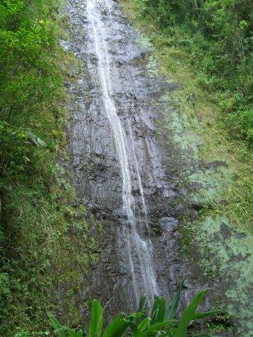 Manoa Falls.... needs a little more rain.