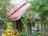 Our Koh Lanta Bungalow... : by jciecko, Views[256]
