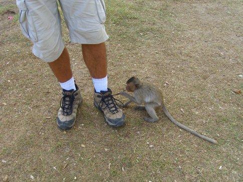 Sebastian always attracts the mischevious monkeys