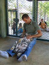 Tiger Kingdom: by jciecko, Views[182]