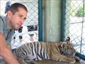 Tiger Kingdom: by jciecko, Views[178]