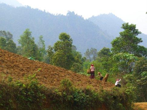 Planting cassava