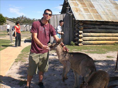 kangoroos en captivite, facile a approcher.