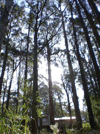 Dandenongs Forest