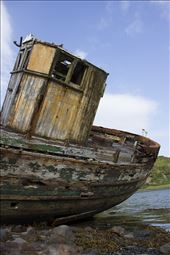 A flower grows on the back of the ship wrecked Diamond on the Isle of Kerrera.: by jesmerk, Views[92]