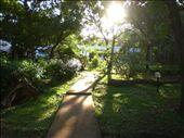 Inside our resort was so lush: by jess_az, Views[145]