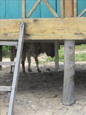 Donkey: by jesseandjustine, Views[178]