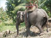 More Elephants in North of Koh Phangan: by jessikat, Views[1163]