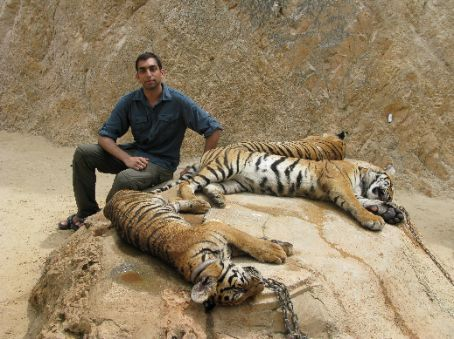 Tigers sleeping on the rocks.