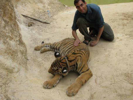 Me stroking the sleepy tigers.