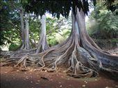 Jurrasic Figs: by jimandnicadventure, Views[184]