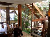 Tree growing inside the house: by jimboandjanet, Views[3759]