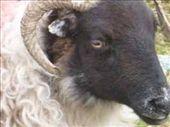 What ewe looking at?: by jimboandjanet, Views[252]