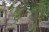 Skipton Castle - the yew tree in the courtyard is 500 years old.: by jimboandjanet, Views[347]
